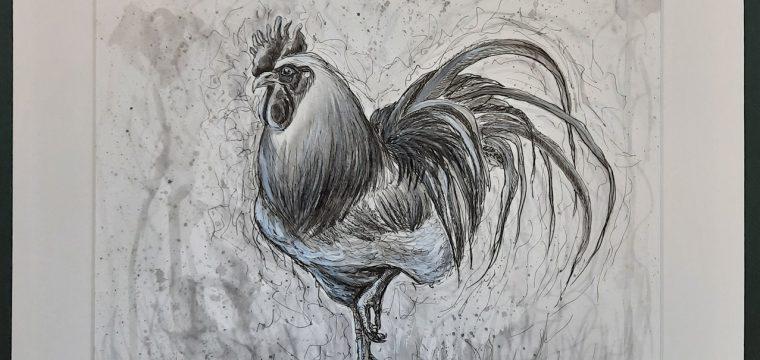 cockerel1280